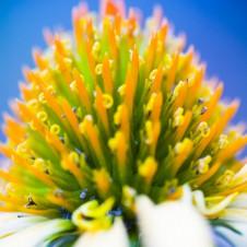 flower_t