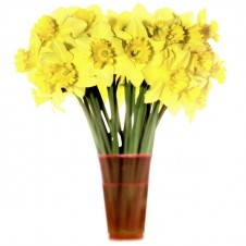 flowers_t